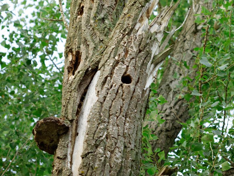 Hodnocení stavu stromů