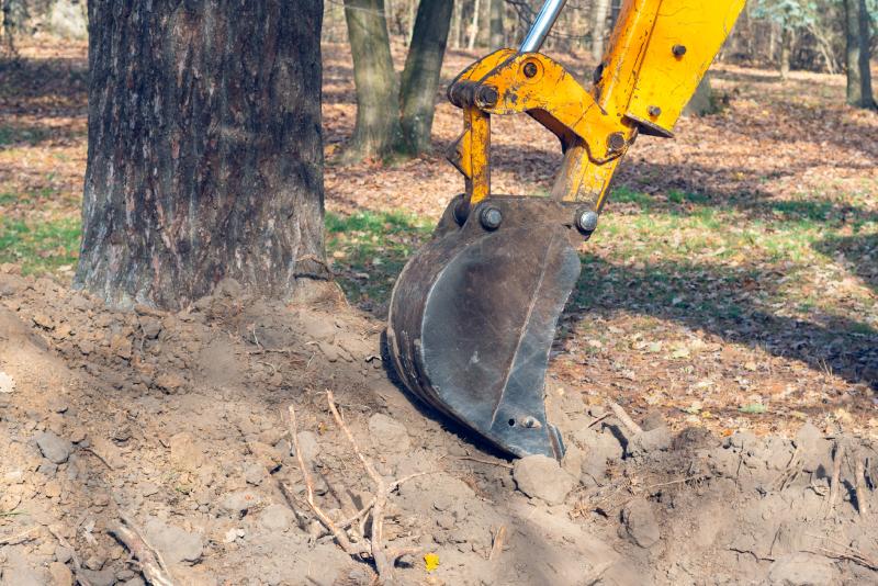 Ochrana dřevin při stavební činnosti